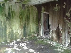 Feuchte Wand Schimmel Was Tun : feuchte w nde sanieren nasse w nde trocknen in berlin ~ Indierocktalk.com Haus und Dekorationen