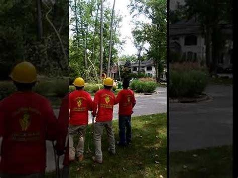 tree removal company  nassau county ny tree trimming