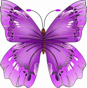 Free Graphics of Butterflies - Butterfly Clipart