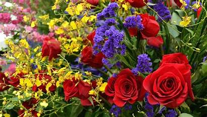 Vibrant Flowers Variety Wallpapers Roses Px Background