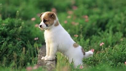 Puppies 1080 Dog Puppy Wallpapers Desktop Background