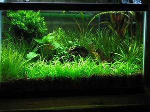 Co2 Aquarium Berechnen : the basics of co2 injection for the planted ~ Themetempest.com Abrechnung