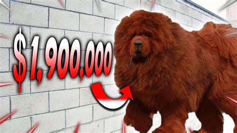 Top 10 Most Expensive Dog Breeds In The World Youtube