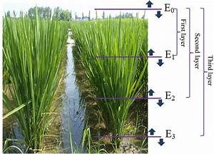 Figure 1  Sketch Map For Measuring Irradiance In The Rice