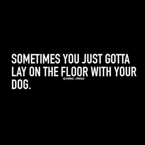 25 best labrador quotes on pet quotes