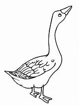 Goose Coloring Pages Angry Colouring Clipart Duck Glass Netart Template Stained Animals Mother Animal Ace Library Popular Results sketch template