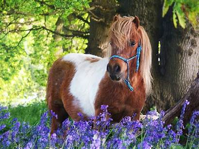Pony Shetland Hood Robin Riding Spring Club