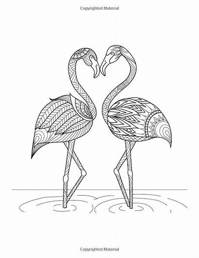 Exotic Winged Creatures Icolor Coloring Pages