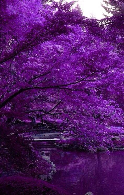 Best Purple Things Ideas And Images On Bing Find What You Ll Love