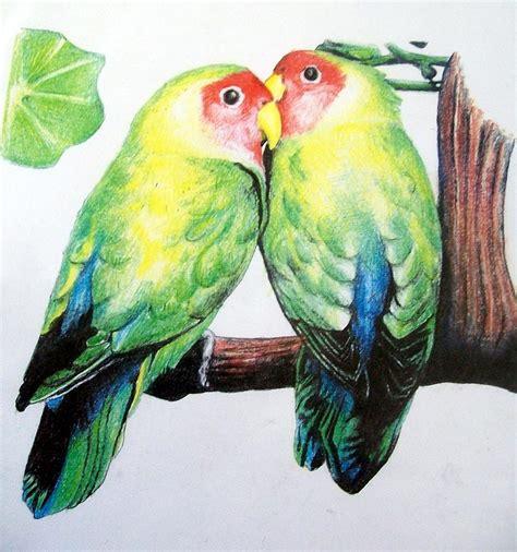 love birds drawing  david hansen
