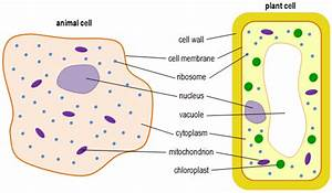 Biology B2