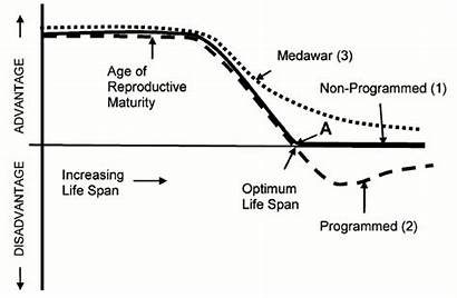 Theories Ageing Aging Programmed Evolutionary Lifespan Age