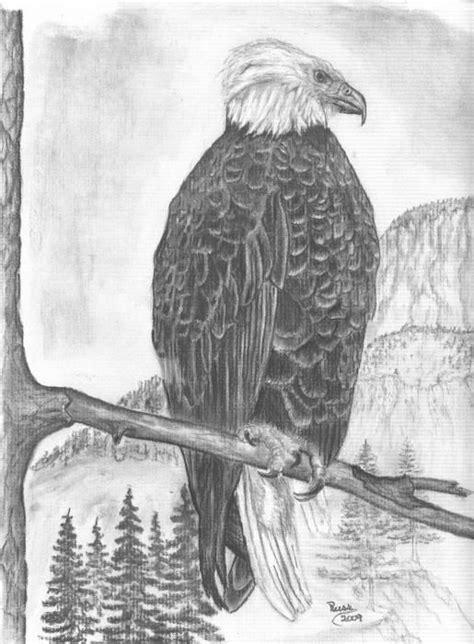345 best images about EAGLE- DRAWING AND PAINTING on