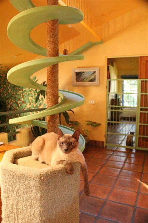 craziest cat climbing structures   world