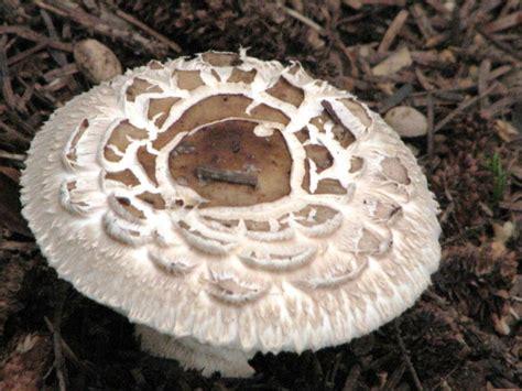 Plötzlich Viele Pilze Im Garten by Viele Verschiedene Pilze Im Garten Pilzbestimmung U