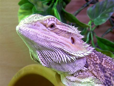 Xyra's Aquariums, Reptiles, Mountain Biking, Offroading
