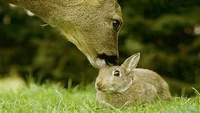 Animals Wallpapers Bunny Rabbits Desktop Rabbit Bunnies