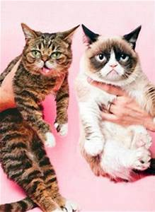 Lil' Bub and Grumpy Cat | Catwoman | Pinterest