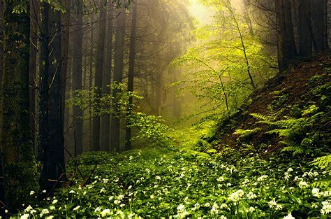 schoenes bild der natur aussergewoehnliche positive