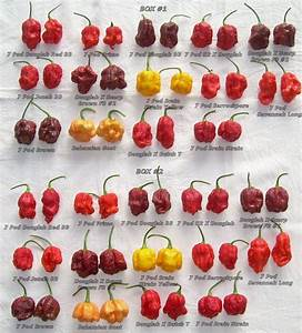 types of chillies in the world - Google Search   Chillies ...
