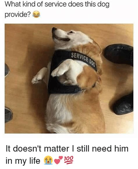 T Dog Memes - what kind of service does this dog provide service it doesn t matter i still need him in my