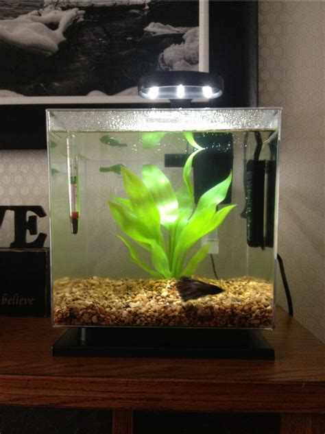 types  bowl betta fish tank heaters house