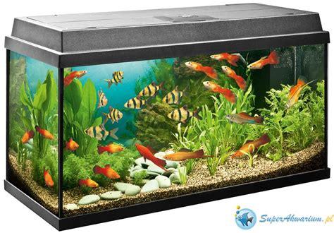 akwarium dla laika prośba o pomoc aquael leddy set 60 pytania początkującego akwarysty