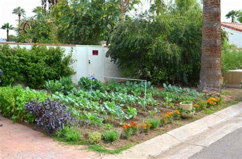 small space vegetable gardening ideas birds  blooms