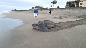 The Biggest Turtle I have ever Seen, WTF! – SSWI TV SSWI TV