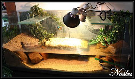 mon aquaterrarium pelomedusa subrufa le de naskaquariophile fr