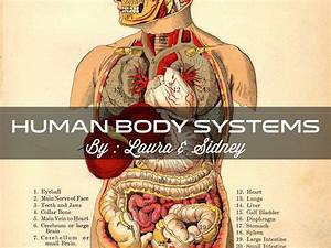 Human Body System By Sidney Critchley