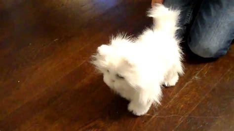 Furreal Friends Lulu's Walkin' Kitty Review