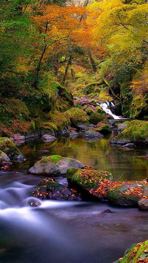 forest creek autumn iphone  wallpaper hd