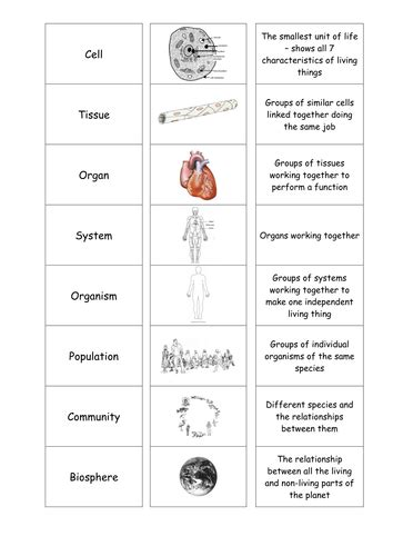 Cells Tissues Organs Cardsort By Motllorrac  Teaching Resources Tes