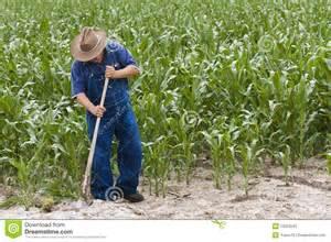 Farmer Planting Corn