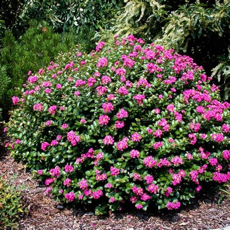 be the to review pocomoke crape myrtle cancel reply