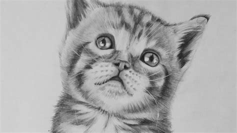drawing  realistic baby kitten cute cat youtube