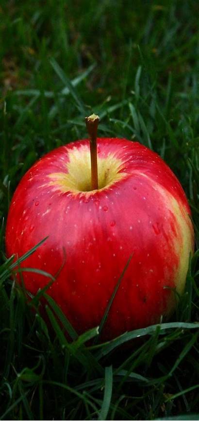 Apple Fruit Wallpapers Grass Background 1520 Iphone