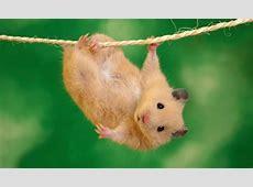 Lustige Tierbilder süße Grußkarten für verschiedene Anlässe