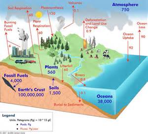 what are some exles of carbon sources and carbon sinks