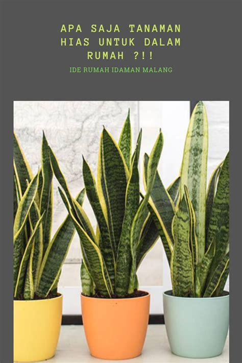 tanaman hias   rumah plants
