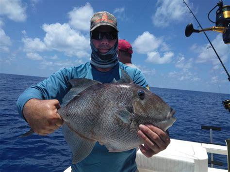 grouper gag offshore ars sunday
