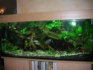 Aquarium Deko Ideen : pin aquarium einrichten deko ideen nat rliche ~ Lizthompson.info Haus und Dekorationen