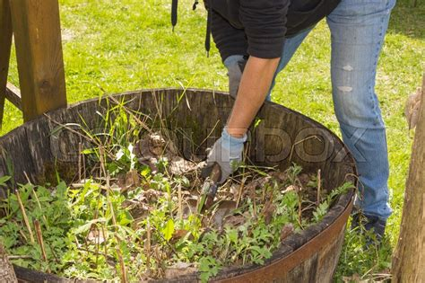 Gartenarbeit Im Hochbeet Mit Tomaten, Chili, Im Frühjahr