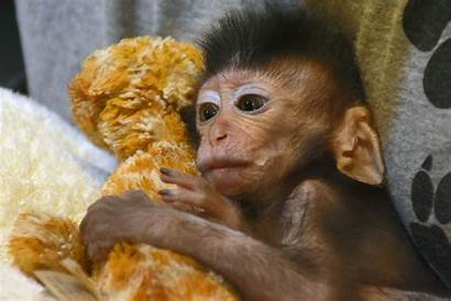 Monkey Toy Bear Instead Squashed Moment Orphaned