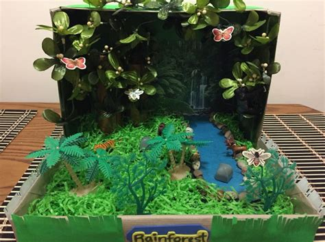 rainforest   shoebox rainforest habitat rainforest
