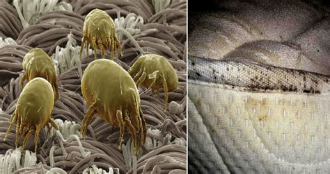 homemade dust mite killer   rid   unexpected