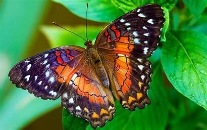 Butterfly 4k Screen 1080p Wide