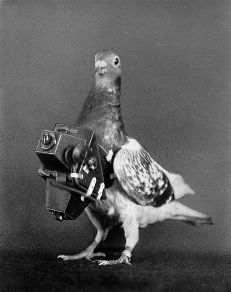 police  india arrested  pigeon suspected  spying