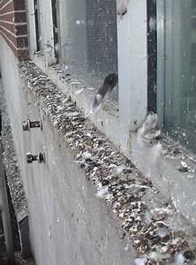 pigeon fouling guano removal eco environmental